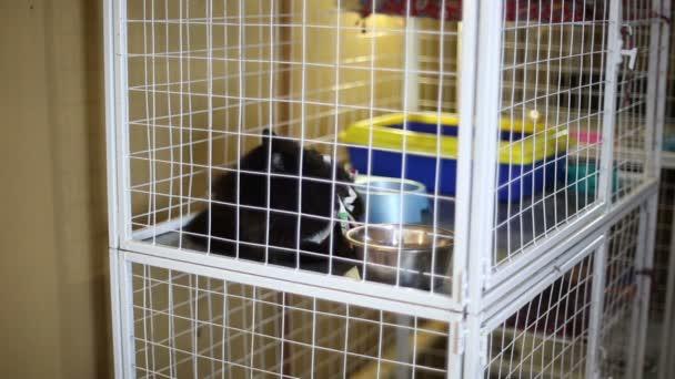 Tierheim: Katzen warten auf ihre neuen Besitzer