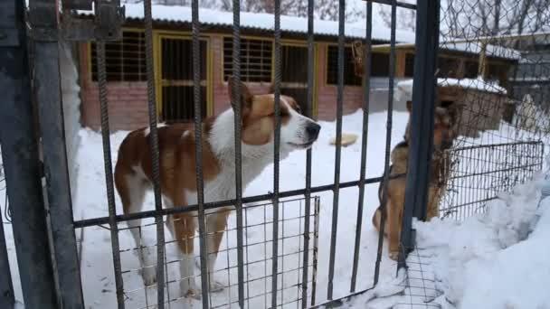 Tierheim: Hunde warten auf ihre neuen Besitzer