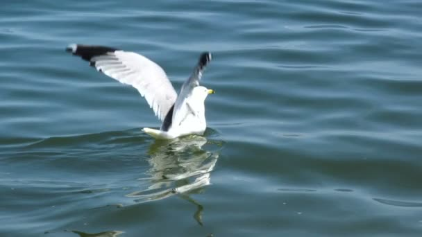 Sea gull starts fly from water in slowmotion