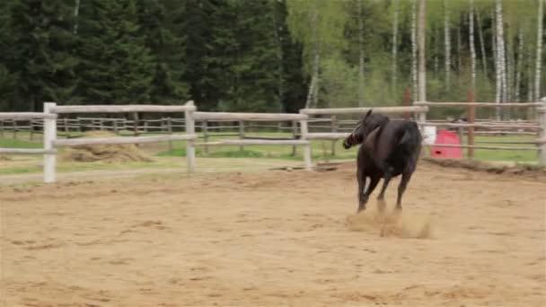 horse rears in a paddock