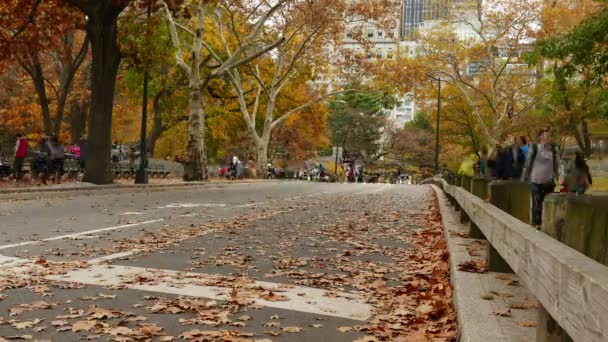 Horse, runners and bicyclists in autumn in central park
