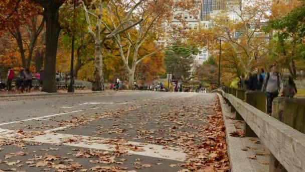 Cavallo, corridori e ciclisti in autunno a central park