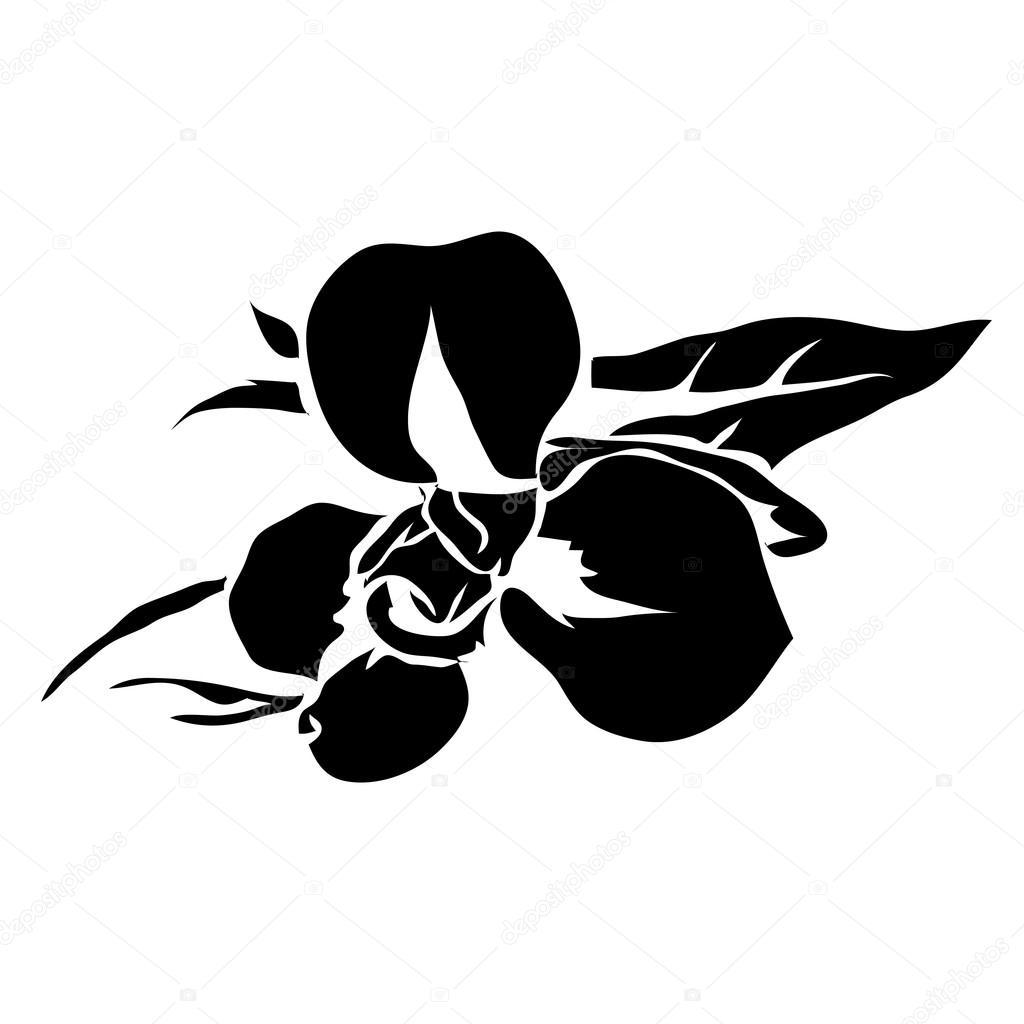 Iris Tatouage image de vecteur ligne fleur iris. peut être utilisé pour le logo et