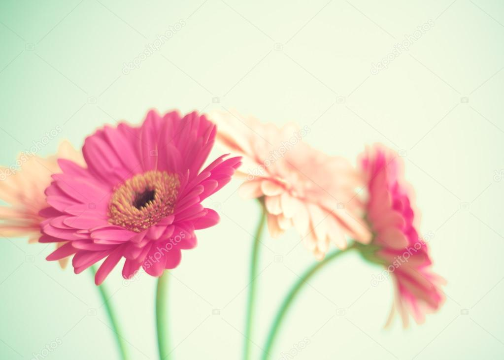 Pink flowers on mint