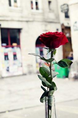 Vintage Roses in Paris