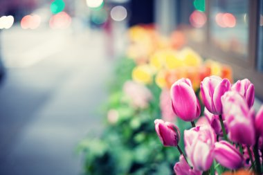Tulips on street of New York City