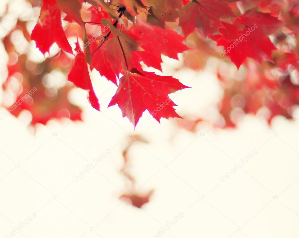 Colorful autumn tree leaves