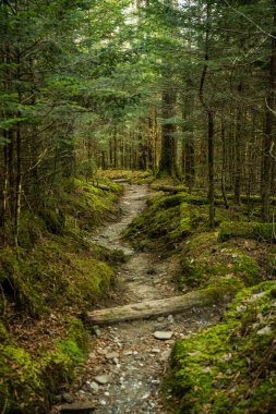 Trail Cuts Through Mossy Forest Floor on Sugarland Mountain in Great Smoky Mountains National Park