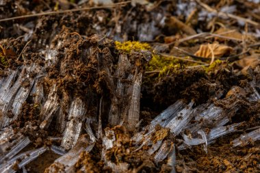 Needle Ice Pushes Through Dirt and Moss on Sugarland Mountain Trail in Great Smoky Mountains National Park