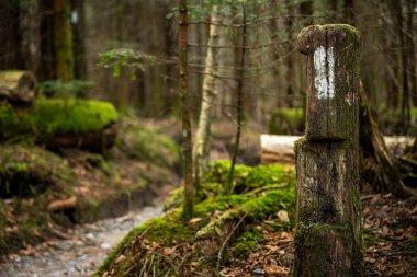 Single Appalachian Trail Blaze on Post in wooded forest