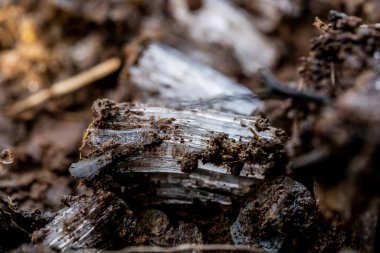 Layers of Mud And Needle Ice in Great Smoky Mountains National Park