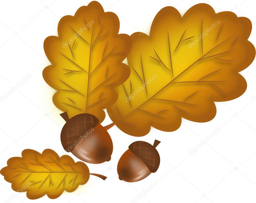 hojas de roble con bellotas — Fotos de Stock © sidliks #54382813