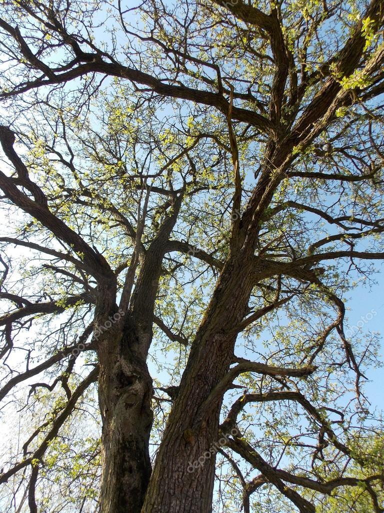 Tree twigs