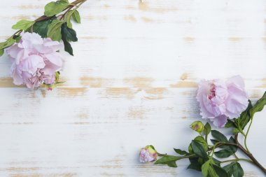 pink peonies on white rustic wooden background