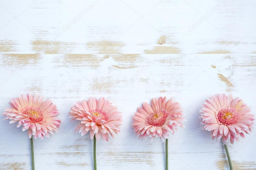 Pink gerbera on white rustic wooden background — Stock Photo
