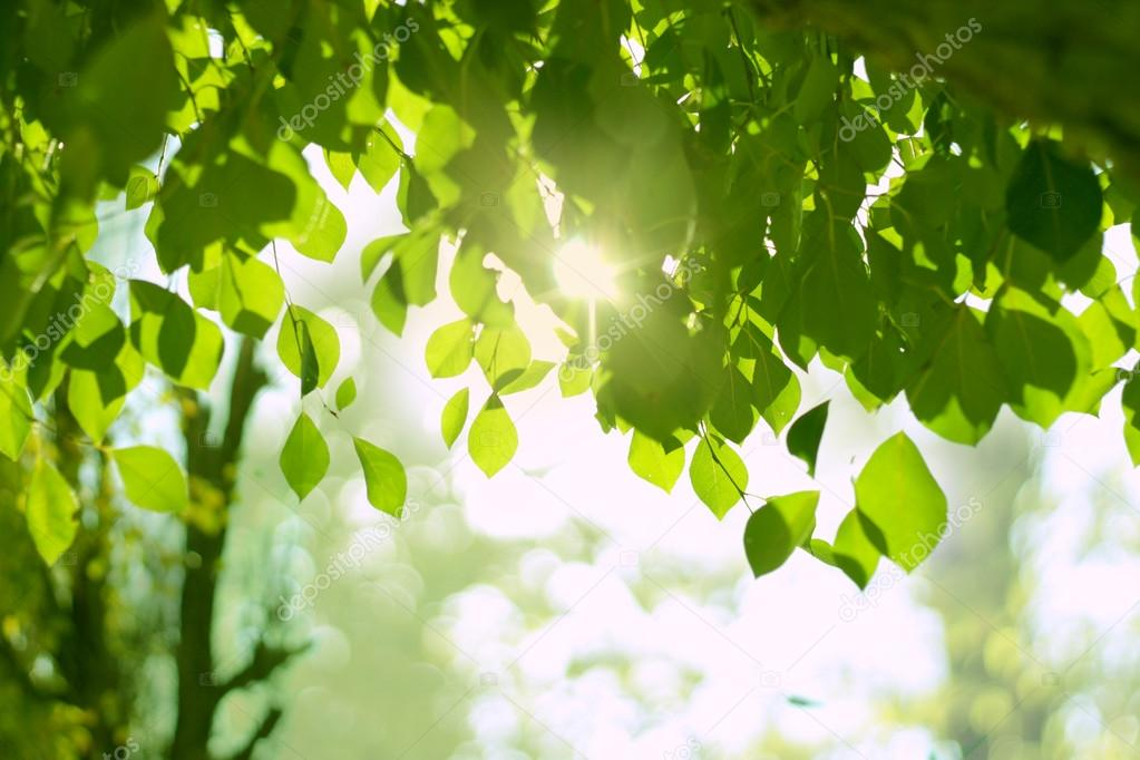 leaves and sun