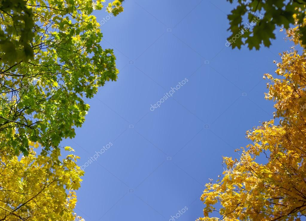 autumn trees against the blue sky