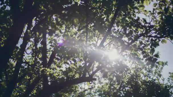 fa az erdő, a napfény. természet.