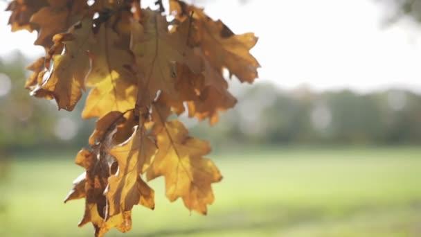 Mano di giovane donna che tocca di foglie in un campo, allaperto