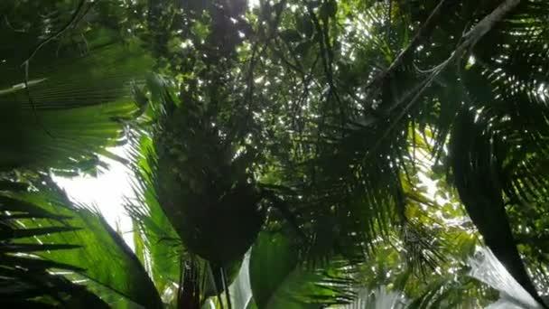 kokosové stromy perspektivní pohled od podlahy vysoko