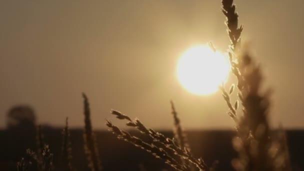 Východ slunce na krásné ráno louka