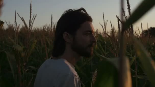 Handsome hipster with beard walking through a corn field. Nature landscape in sunset/sunrise.