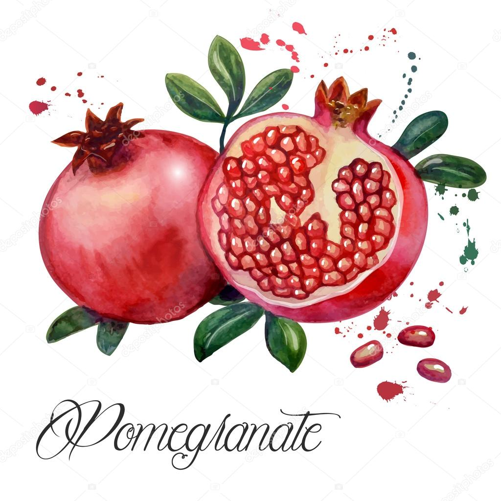 grenade fruit image vectorielle vector art 86500938. Black Bedroom Furniture Sets. Home Design Ideas