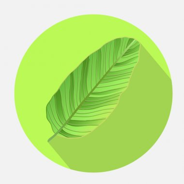 Banana leaves vector  icon