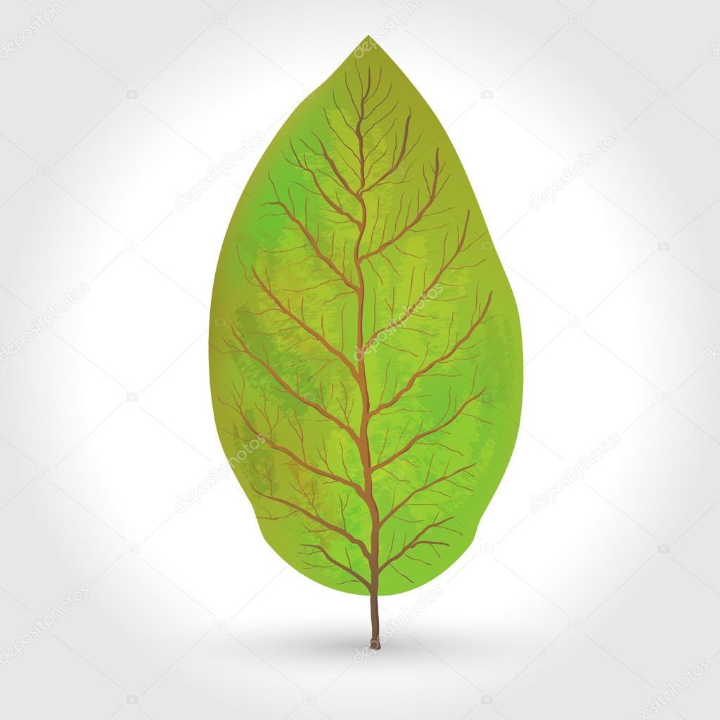 tobacco leaves vector illustration
