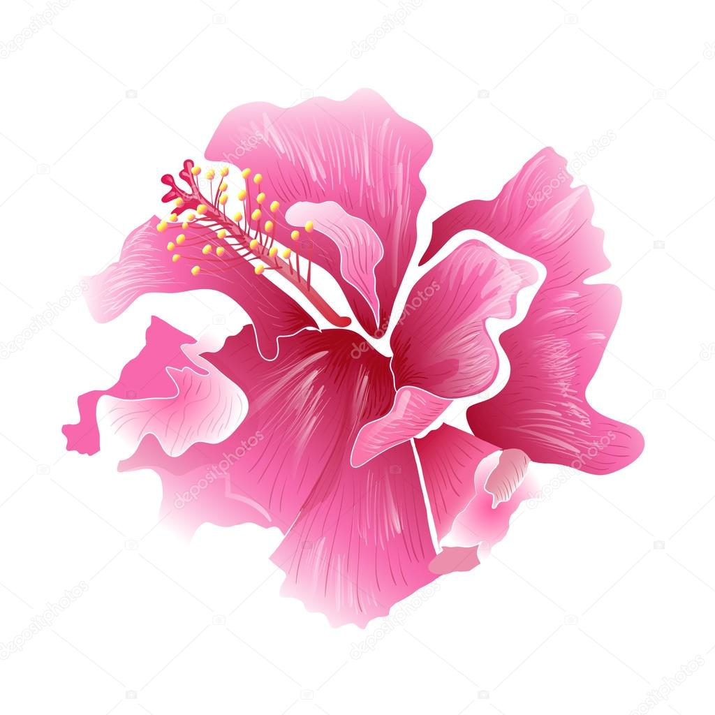 Hibiscus flower surfing and tropical symbol stock vector hibiscus flower surfing and tropical symbol vector illustration vector by vector art izmirmasajfo Image collections