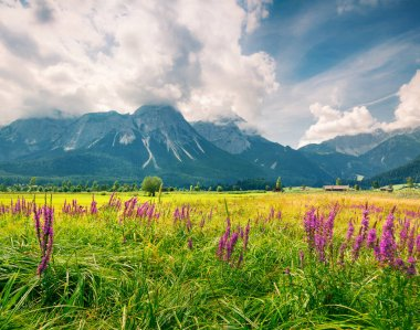 Green meadow on the Golf club Zugspitze, Lermoos village loccation. Colorful summer morning in  Austrian Alps, Reutte district, state of Tyrol, Austria, Europe. Artistic style post processed photo.