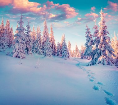 winter  in the Carpathian mountains.