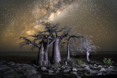 Baobab tree under the Milky way