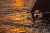 elefántok víz