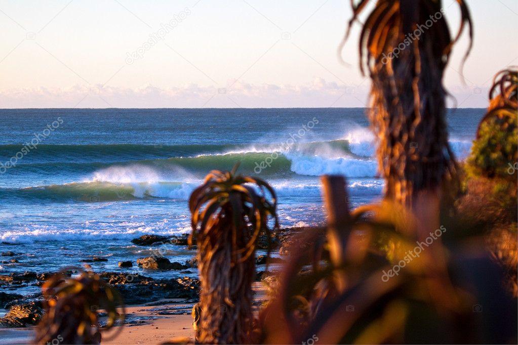 Waves behind aloe plants