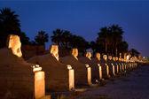 Photo Pillars in Luxor