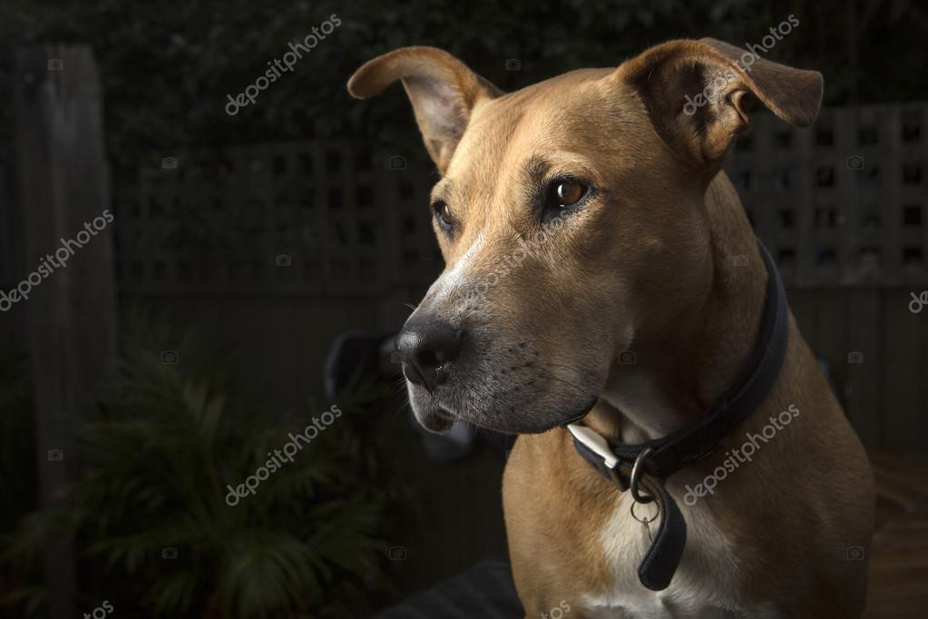 Dog with black backdrop