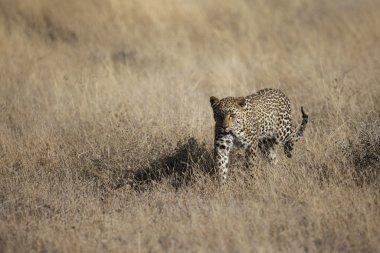 Wildlife found on Safari