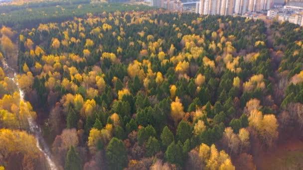 Letecké video. Panorama smíšeného lesa v blízkosti města. Kamera se posune na stranu