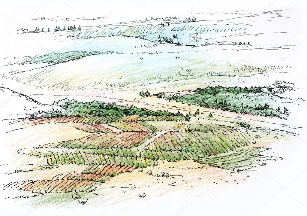 landscape with vineyard