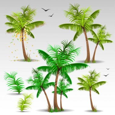 Illustration of palm trees set clip art vector