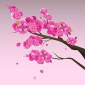 Fotografie Japanese plum blossom 2