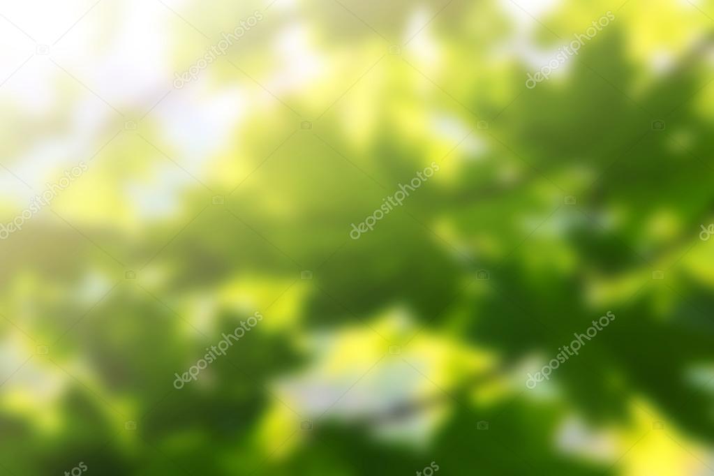 Sfondi Gratis Di Primavera Con Il Sole Foto Stock Martinlisner