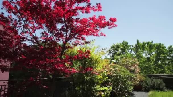 podkroví, panoramatické střešní zahrada s trávníkem, snímků a javor červený