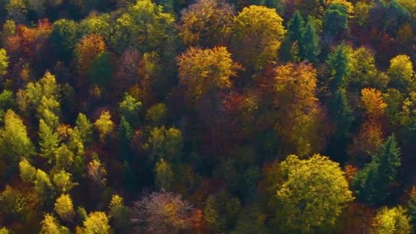 Černý les v jižním Německu za slunečného dne na podzim
