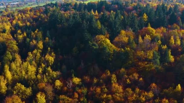 A fekete erdő Dél-Németországban egy napsütéses napon ősszel