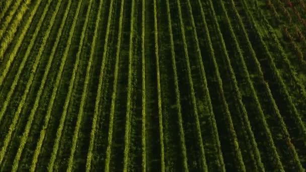 Aerial view around vineyards in Rhineland-Palatinate in Germany in autumn.