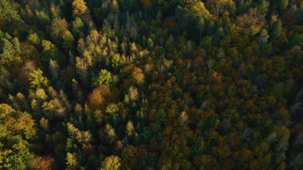 Letecký pohled na podzimní stromy v zamračeném dni v černém lese