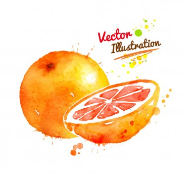 Watercolor hand drawn grapefruit.