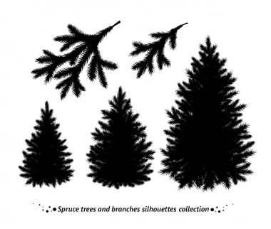 Spruce trees silhouettes